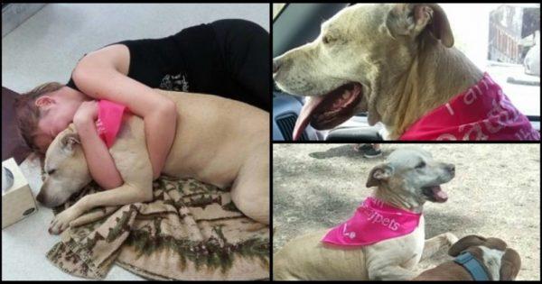 Οι τελευταίες στιγμές μίας γέρικης σκυλίτσας. Οι φωτογραφίες που συγκλόνισαν το διαδίκτυο!