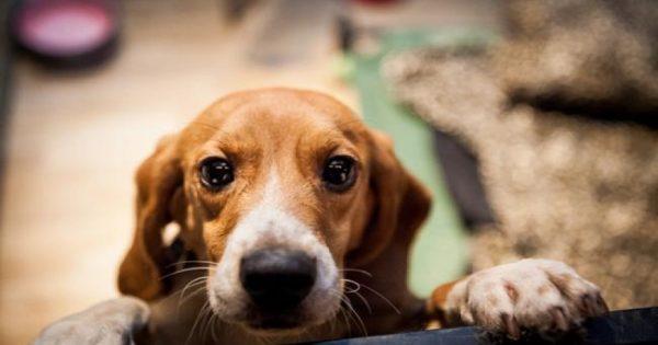 Φιλόζωοι ξυλοκόπησαν αλλοδαπό που κλώτσησε σκύλο έξω από ταβέρνα στον Αγ. Δομέτιο