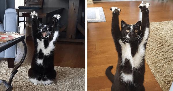 Αυτή η γάτα σηκώνει συνεχώς τα χέρια ψηλά και κανείς δεν ξέρει γιατί!