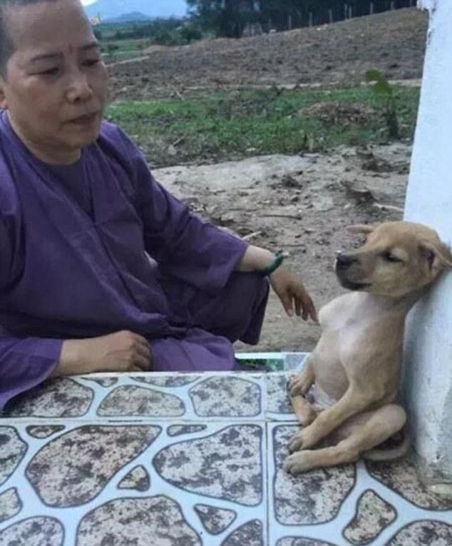 Αδέσποτος σκύλος