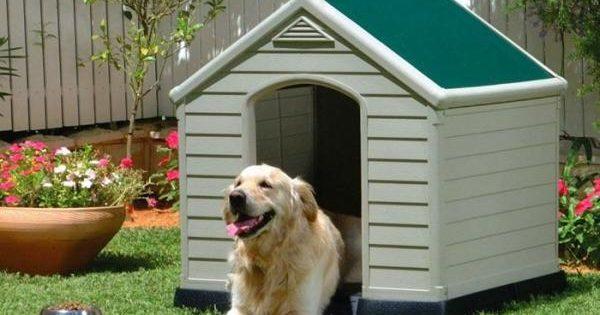 Τι να κάνετε αν ο γείτονας απειλεί τα ζωάκια σας
