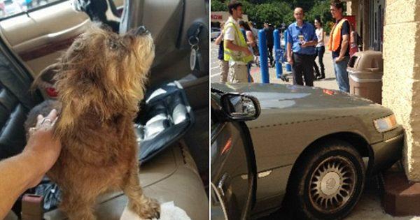 Άφησε τα 2 σκυλάκια της μέσα στο αυτοκίνητο με την μηχανή ανοιχτή. Που να φανταζόταν ότι θα γίνει ΑΥΤΟ..!