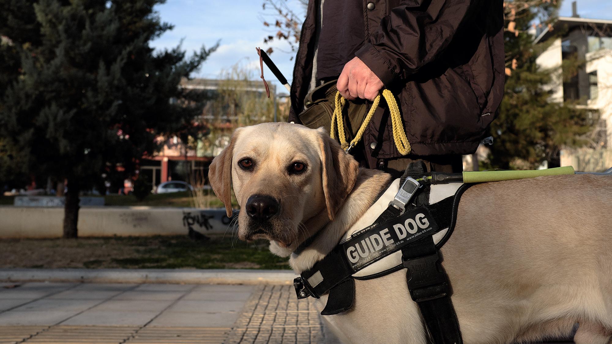 τυφλή σκύλοι οδηγοί