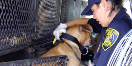 Ζητάμε την ίδρυση Ελληνικής Αστυνομίας για τα Ζώα