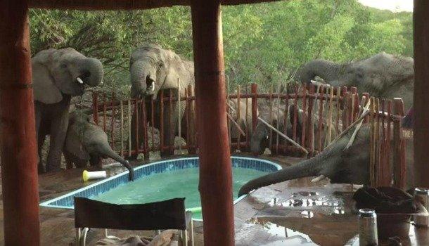 πισίνα ελέφαντες