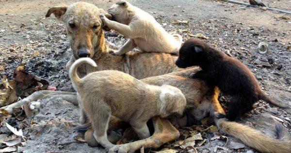Σύμφωνα με τον νόμο 4039 / 12 υπεύθυνοι για τα αδέσποτα ζώα είναι οι Δήμοι