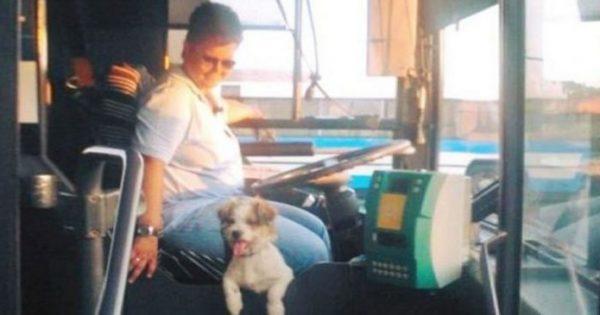 Η οδηγός ΚΤΕΛ που δουλεύει παρέα με το σκυλάκι της