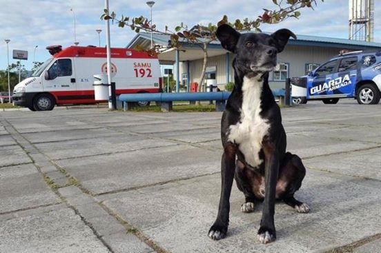 πιστός σκύλος