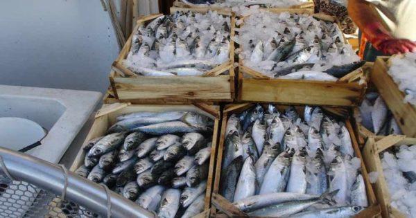 Ένα στα πέντε ψάρια δεν είναι αυτό που νομίζετε ότι αγοράζετε!