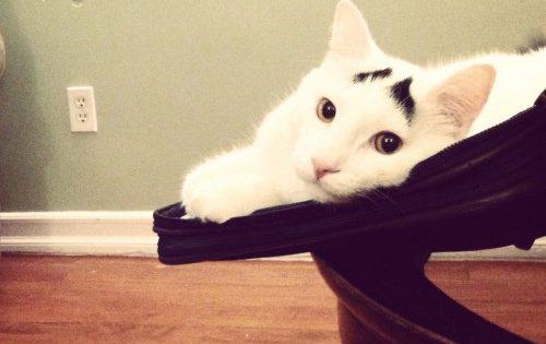 Οι επιστήμονες βρήκαν έναν πολύ απλό τρόπο για να κάνετε τη γάτα σας πιο χαρούμενη και υγιή