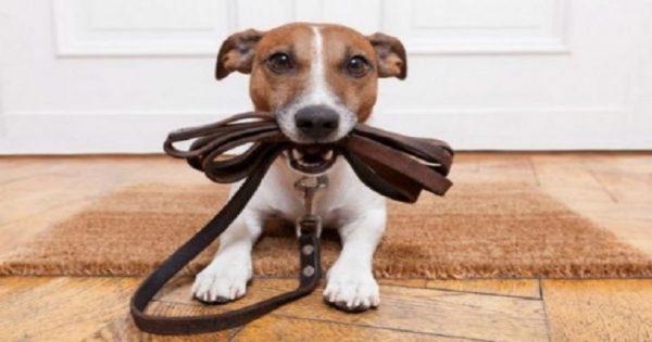 Προσοχή: Αυτός είναι ο νέος νόμος για τα σκυλιά! Τι πρέπει να ξέρετε;