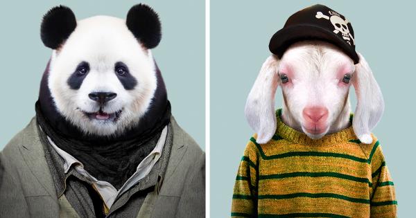Καλλιτέχνης πέρασε 3 χρόνια ντύνοντας τα πλάσματα του ζωολογικού κήπου σαν ανθρώπους