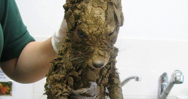 Βρήκαν ένα άγνωστο ζώο και μόλις το καθάρισαν δεν πίστευαν στα μάτια τους