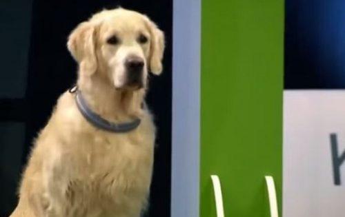O απίθανος σκύλος που αρνήθηκε να παίξει το ηλίθιο παιχνίδι και διασκέδασε με τον δικό του τρόπο