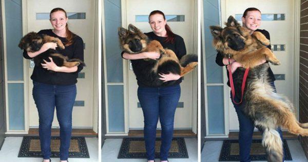 Ζευγάρι καταγράφει πόσο πολύ μεγάλωσε ο σκύλος τους μέσα σε μόνο 8 μήνες