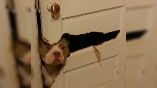 σκύλοι σκυλιά σκανταλιές