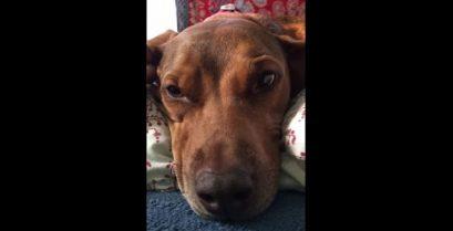 Ένας σκύλος είναι λυπημένος όταν λείπει το αφεντικό του