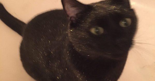 Ολόμαυρη γάτα πέφτει κατά λάθος σε μπανιέρα γεμάτη χρυσό glitter. Το αποτέλεσμα; Βγαλμένο από τα '80s!