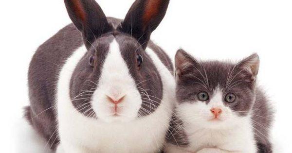 Όταν διαφορετικά είδη ζώων μοιράζονται τα ίδια χρώματα