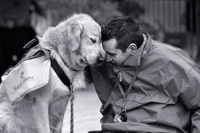Σκύλος Άνθρωπος και σκύλος άνθρωπος