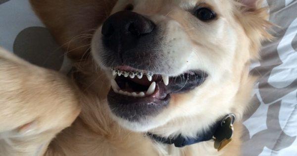 Αυτός ο σκυλάκος είχε πρόβλημα με τα δόντια, έτσι έβαλε σιδεράκια!