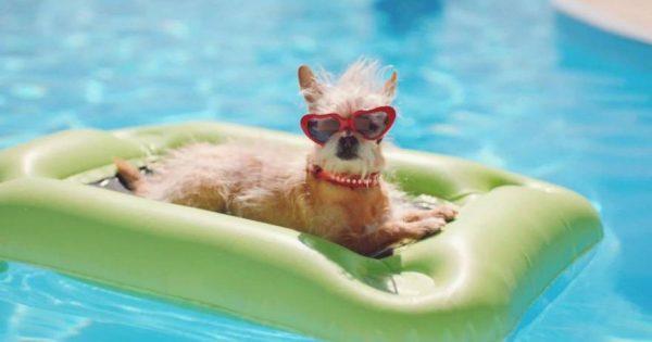 Όταν οι τετράποδοι φίλοι μας αποφασίζουν να κάνουν βουτιές στην πισίνα … το αποτέλεσμα απολαυστικό! (video)