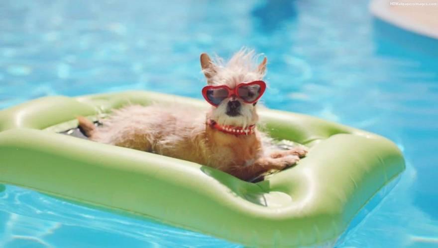 dog_pool