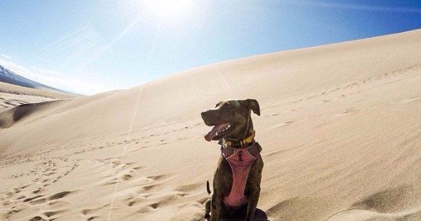 Ένας άνθρωπος και ένας σκύλος γυρίζουν όλη την Αμερική