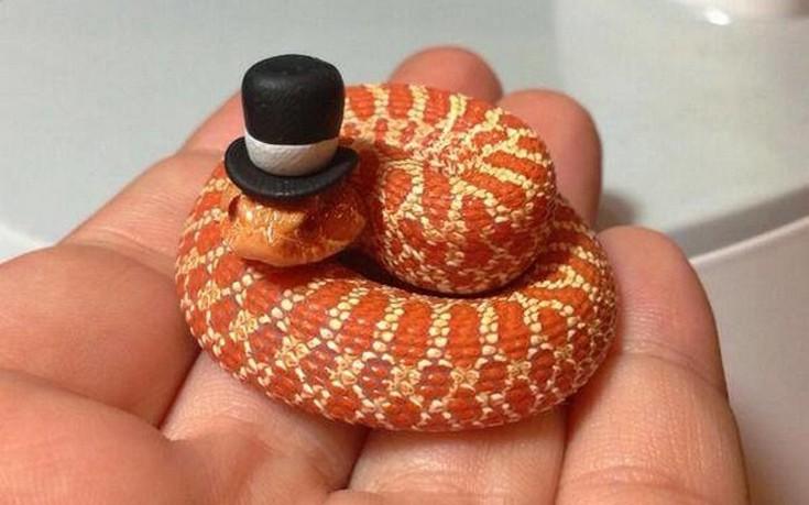φίδια μικροσκοπικά φίδια