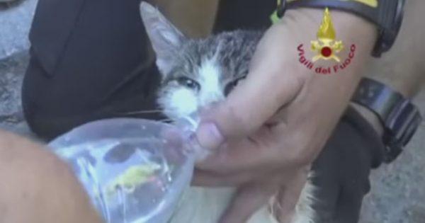 Γάτα βρέθηκε ζωντανή μετά από έξι μέρες στα συντρίμμια του σεισμού στην Ιταλία
