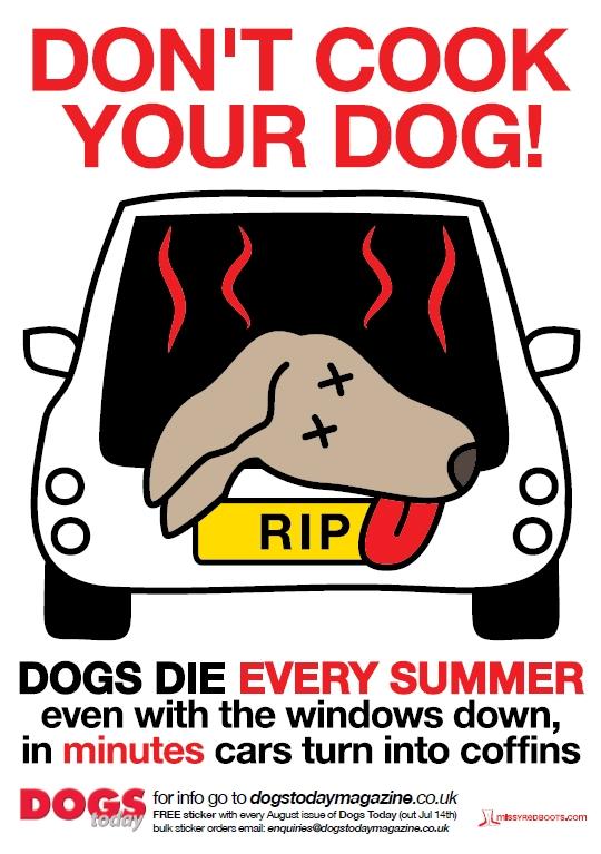 Σκύλος θερμοπληξία ζέστη Γάτα αυτοκίνητο