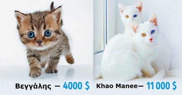 Δείτε πόσοκοστίζουν οι 19 πιο ακριβές ράτσες γάτας του κόσμου. Η τιμή της τελευταίας θα σας σοκάρει!