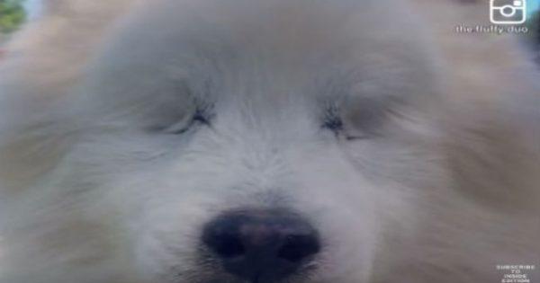 Αυτός ο σκύλος έχασε τα δύο του μάτια εξαιτίας μιας πάθησης – Δείτε πως συνεχίζει κανονικά τη ζωή του! (video)