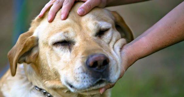 Αρέσουν ή όχι στο σκύλο μας τα χάδια στο κεφάλι;
