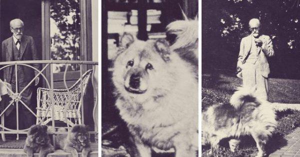 Ποια ήταν η σχέση του Sigmund Freud με τα σκυλιά;