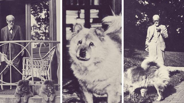 σκυλιά Sigmund Freud