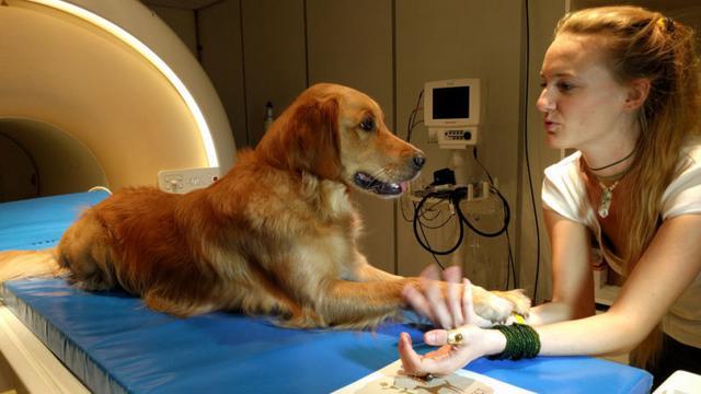 Σκύλος εγκέφαλος σκύλου εγκέφαλος