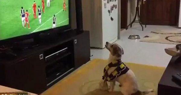 Σκύλος πανηγυρίζει γκολ της αγαπημένης του ομάδας! (video)