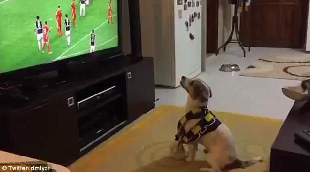 Σκύλος πανηγυρισμός γκολ