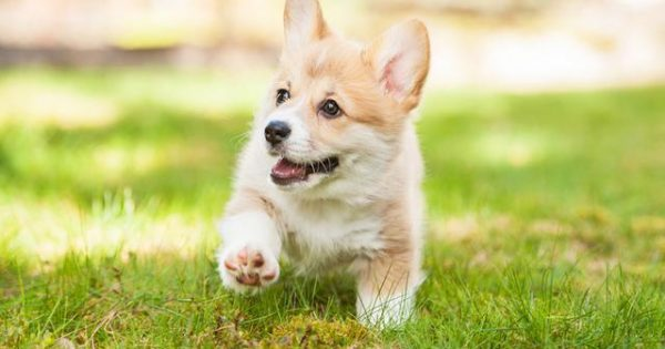 H συγκινητική ιστορία ενός παραπληγικού σκύλου, που η ζωή του άλλαξε από θαύμα (video)
