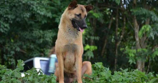 Παρασύρθηκε από αυτοκίνητο ο σκύλος που περίμενε επί ένα χρόνο στο ίδιο σημείο τον κηδεμόνα του…