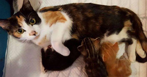 Παράλυτη γάτα σέρνει τον εαυτό της στο σημείο που άφησε τα γατάκια της, αφού ο γείτονας προσπάθησε να την σκοτώσει
