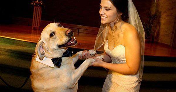 40 φωτογραφίες που μόνο όσοι αγαπάνε τα σκυλιά θα εκτιμήσουν πραγματικά!