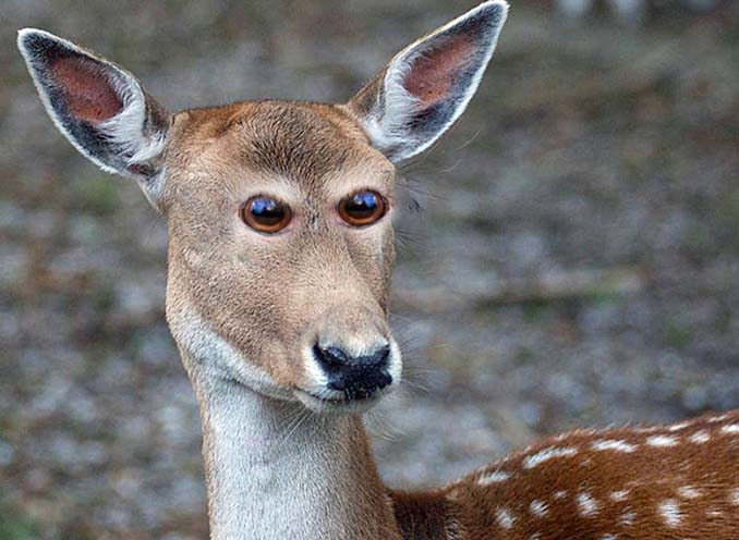 μάτια ζώα