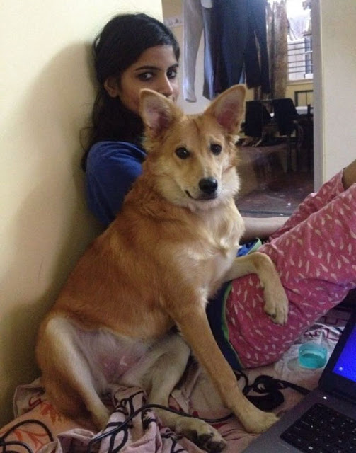 rejected-arranged-marriage-proposal-dog-3