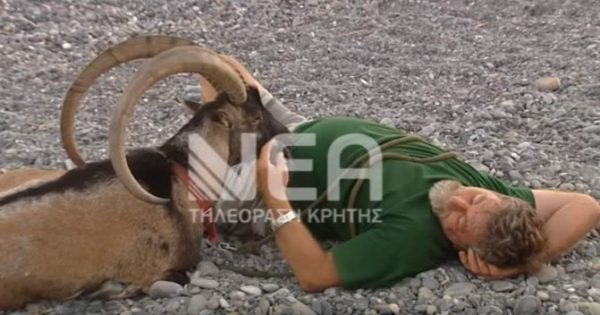 Αυτός είναι ο… χαδιάρης Ρομέο, το πιο φιλικό κρι – κρι της Κρήτης! [video]