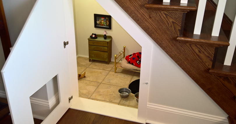 room-for-chihuahua-dog-fb-810x425