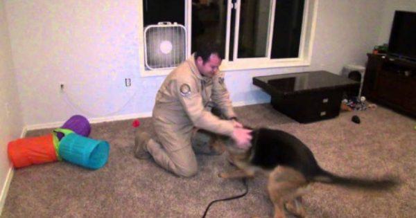 Αυτός ο άντρας έλειπε για μήνες στο στρατό – Δείτε την αντίδραση του σκύλου του όταν επέστρεψε (video)