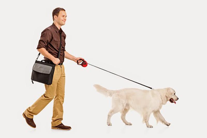 Σκύλος βόλτα σκύλου βόλτα