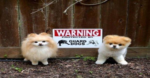 Φωτογραφίες όπου το «Προσοχή Σκύλος» δεν ανταποκρίνεται στην … πραγματικότητα